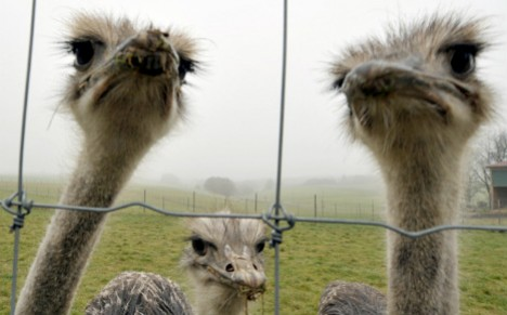activists free ostrich from circus and it dies after getting hit by a car
