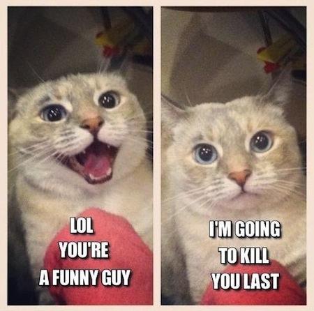 weird cats, evil cats, kill you last cat