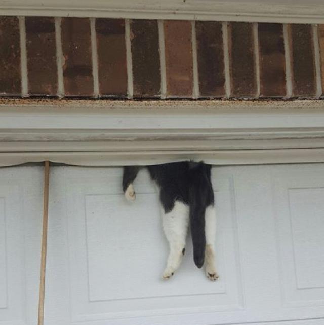 Cat stuck between garage door and wall somehow survives
