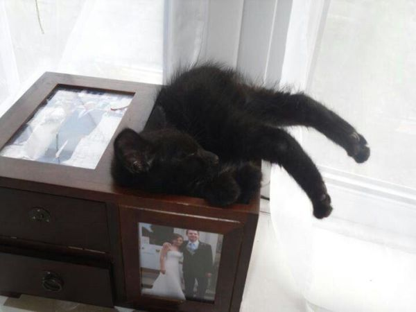 Cats Can Sleep Anywhere, Literally Anywhere