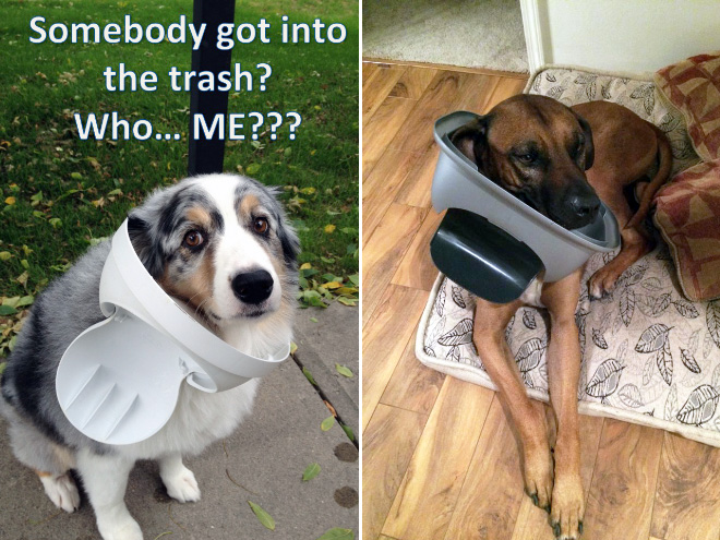 stuck pets, pets stuck pretending everything is cool, dog stuck trash lid