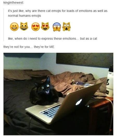 weird cats, evil cats, cat emojis laptop