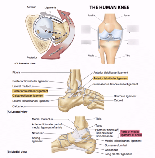 small resolution of ligament in the knee