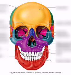 terms in this set 7 nasal bones  [ 1024 x 890 Pixel ]