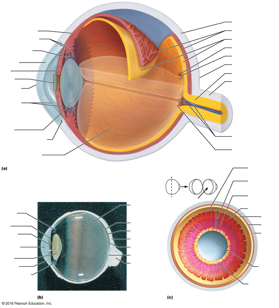 medium resolution of eye diagram quiz