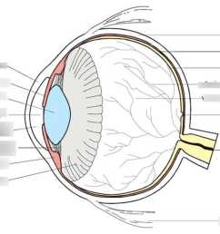 eye diagram quizlet wiring diagram explainedhuman eye diagram quizlet quizlet sign in screen eye diagram [ 1024 x 791 Pixel ]
