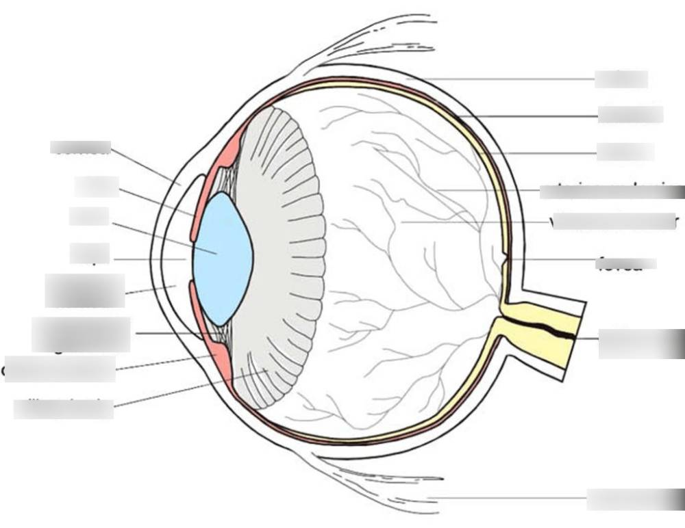medium resolution of eye diagram quizlet wiring diagram explainedhuman eye diagram quizlet quizlet sign in screen eye diagram