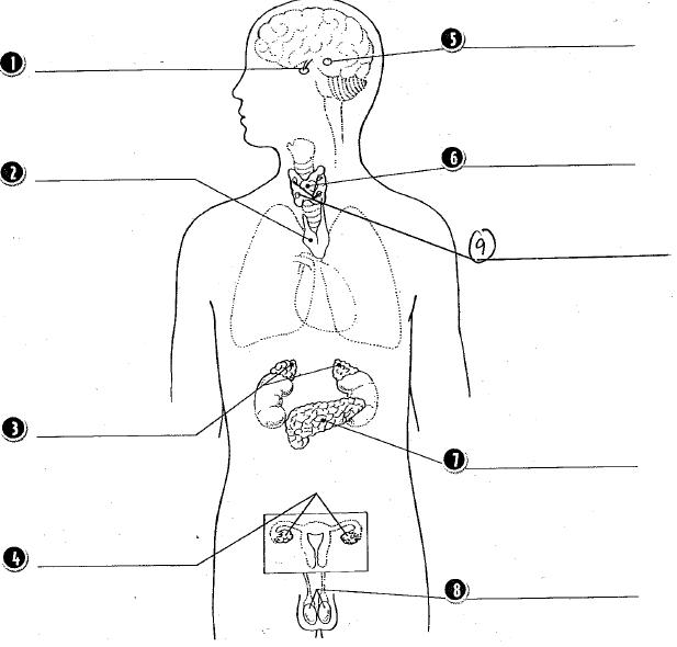 [DIAGRAM] Nervous System Diagram Labeled Quizlet FULL