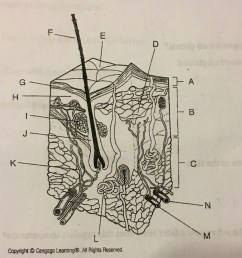 skin system diagram [ 1024 x 924 Pixel ]