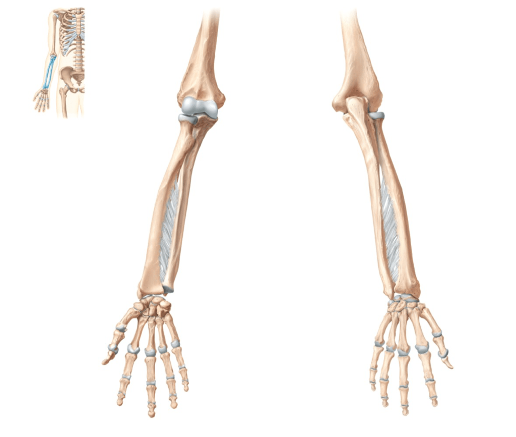 hight resolution of radius and ulna