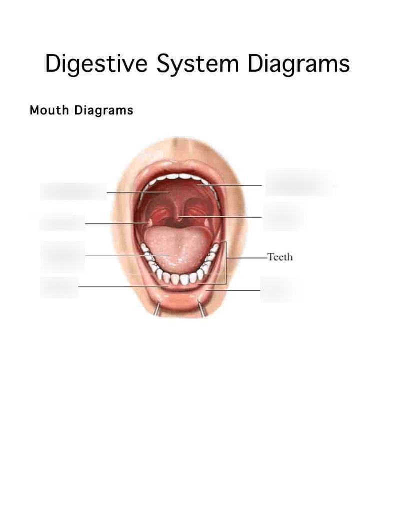 Labelled Diagram Of Tongue : labelled, diagram, tongue, Label, Mouth, Diagram, Quizlet