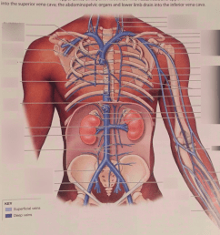 diagram of head and chest [ 769 x 1024 Pixel ]