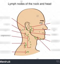 neck glands diagram search wiring diagram lymph nodes cervical diagram lymph node diagram neck wiring diagram [ 1024 x 909 Pixel ]
