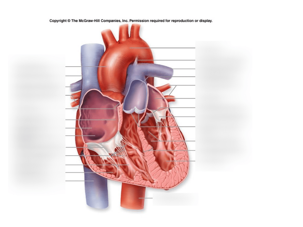 interior heart diagram 3 way switch power at anatomy quizlet location