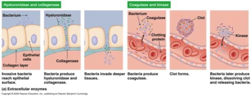Biology Exam 3 Flashcards | Quizlet