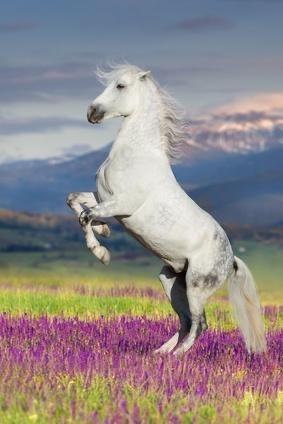 C Est Pas Sorcier Le Cheval : sorcier, cheval, Cartes, Mémoire, C'est, Sorcier, -chien, Aveugle, Quizlet