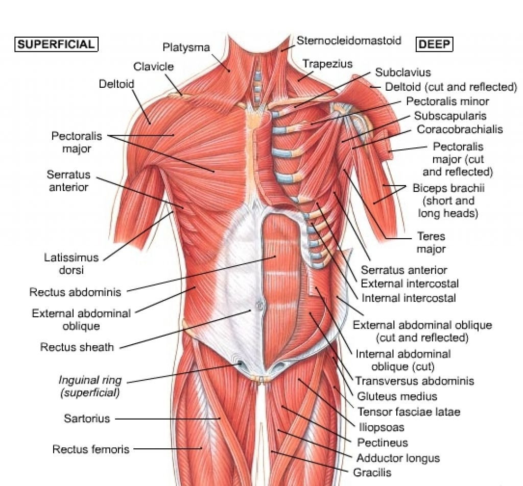 hight resolution of diagram of abdominal