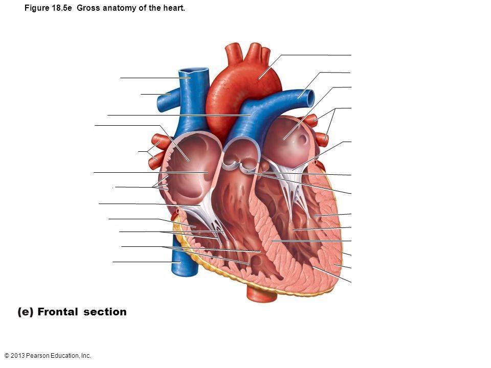 interior heart diagram allen bradley wiring diagrams motor starter quizlet location