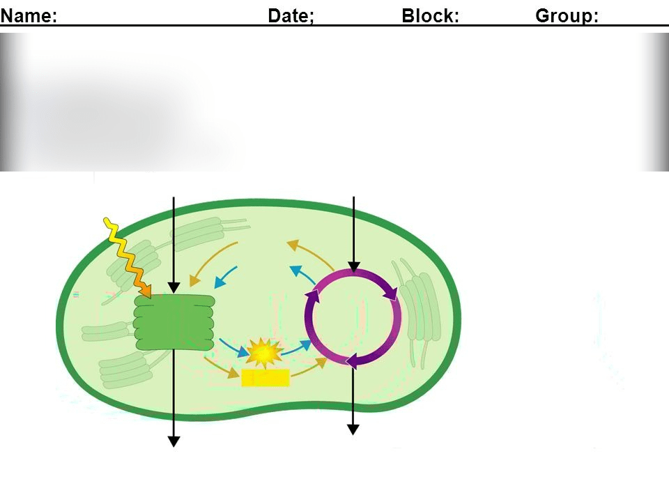chloroplast diagram with labels broan bathroom fans wiring 732 labeling a quizlet location