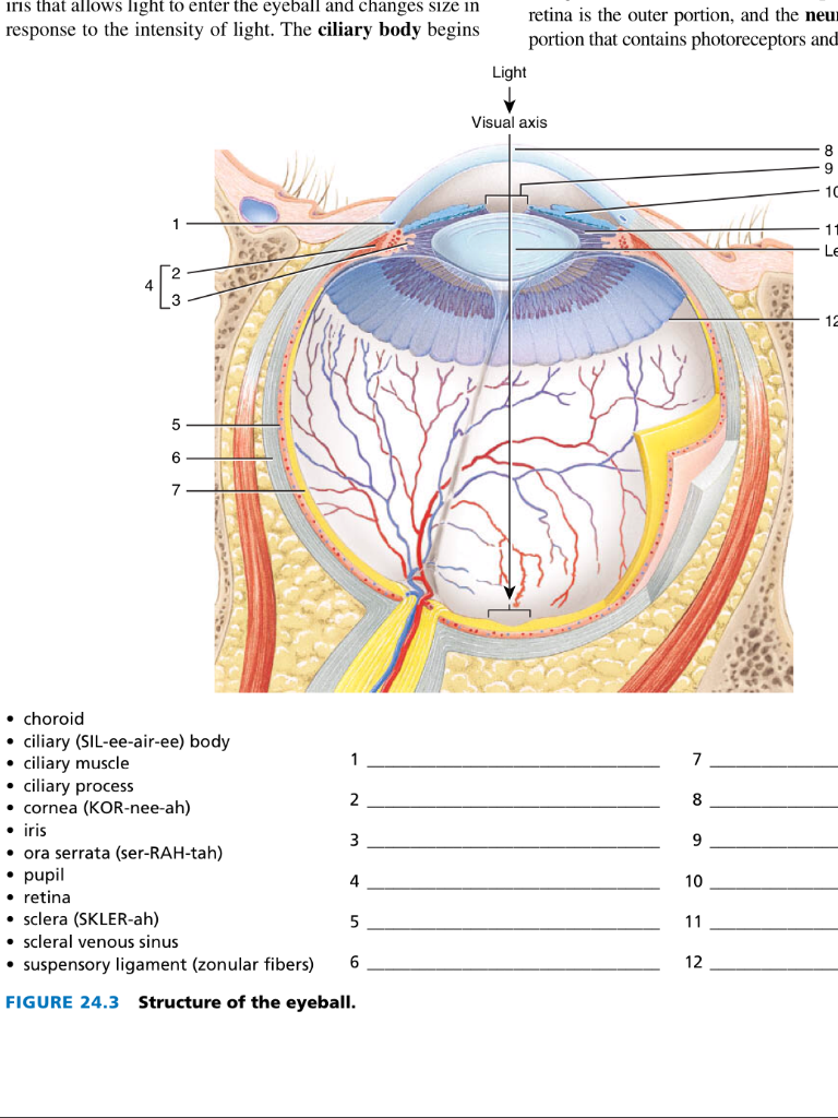 hight resolution of outer eye diagram
