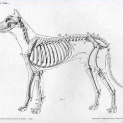 Dog Bone Diagram 7 Pin Plug Wiring Uk Structure Quizlet Location