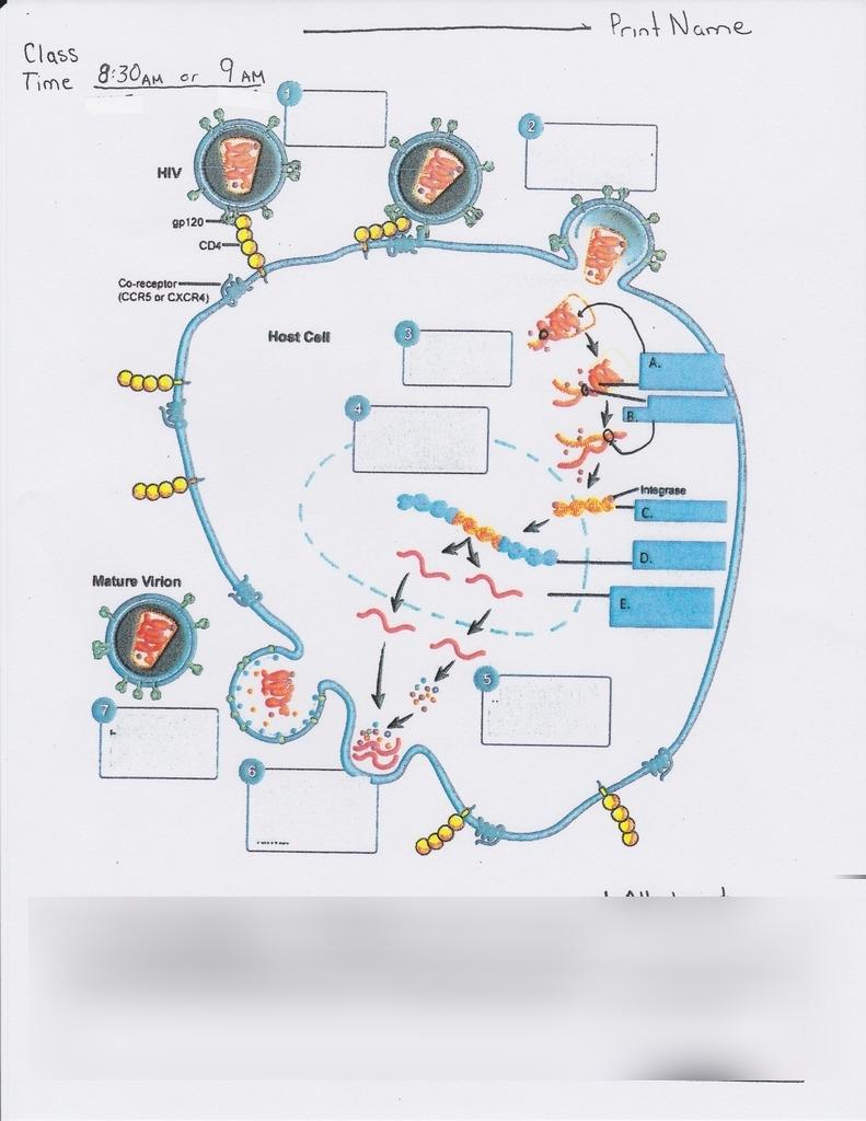 hight resolution of virion diagram medium resolution of virion diagram