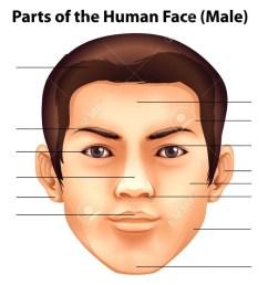 human face diagram wiring diagram page human face parts diagram human face diagram [ 1024 x 892 Pixel ]