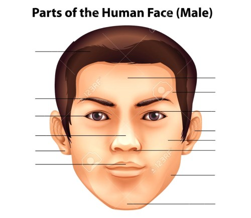 small resolution of human face diagram wiring diagram page human face parts diagram human face diagram