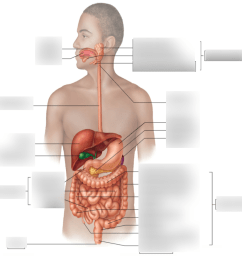 male digestive tract diagram [ 1024 x 926 Pixel ]