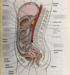 diagram of mesentery peritoneum [ 768 x 1024 Pixel ]