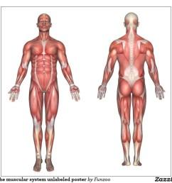 muscle part diagram [ 1024 x 1024 Pixel ]