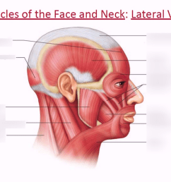 part of the neck diagram [ 1024 x 768 Pixel ]