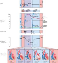 Exss276 Cardiovascular System Myocardial Cells