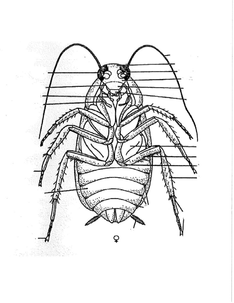 hight resolution of cockroach diagram