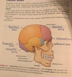 hprs 1206 exam 2 chapter 15 cranial bones [ 768 x 1024 Pixel ]