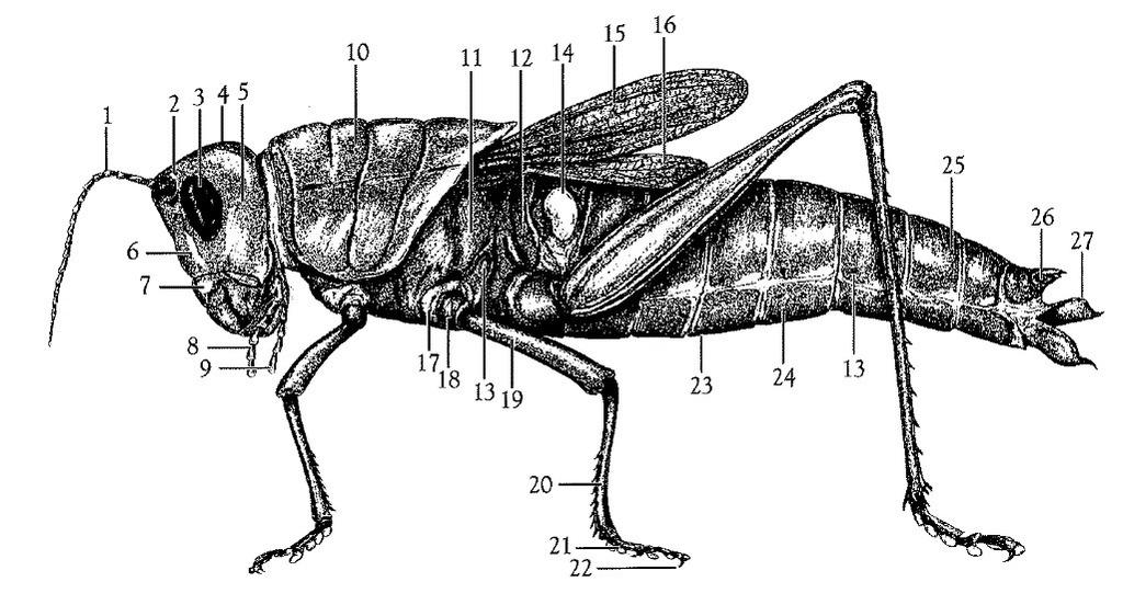 external grasshopper diagram 12vdc 30 40a relay wiring quizlet location