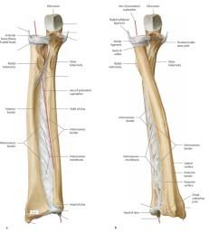 diagram of elbow [ 1024 x 864 Pixel ]