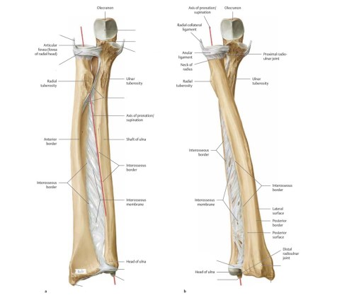 small resolution of diagram of elbow