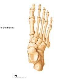 human foot bone diagram [ 1024 x 768 Pixel ]