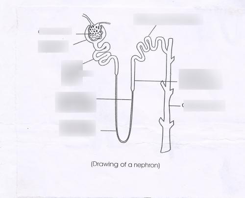 small resolution of diagram of urinalysi