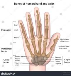 diagram of hand [ 1003 x 1024 Pixel ]
