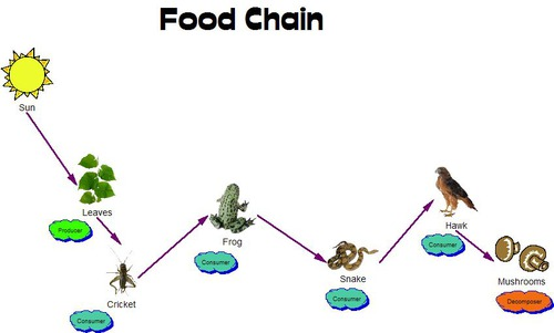 savanna food chain diagram wiring 2 subs dn.cqf1qjxuark8e5bgzbw.jpg