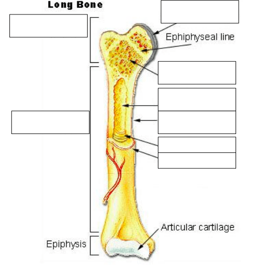Labels are usually small in size, so you should carefully choose the font of the. 31 Label The Long Bone - Labels Design Ideas 2020
