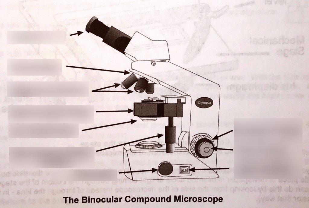 binocular compound microscope diagram condenser fan motor wiring biology lab quizlet location