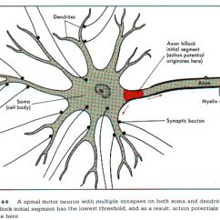 Synapse Diagram Label Prosport Oil Pressure Gauge Wiring Evo6cknuajuhg.tbggx6tq.png