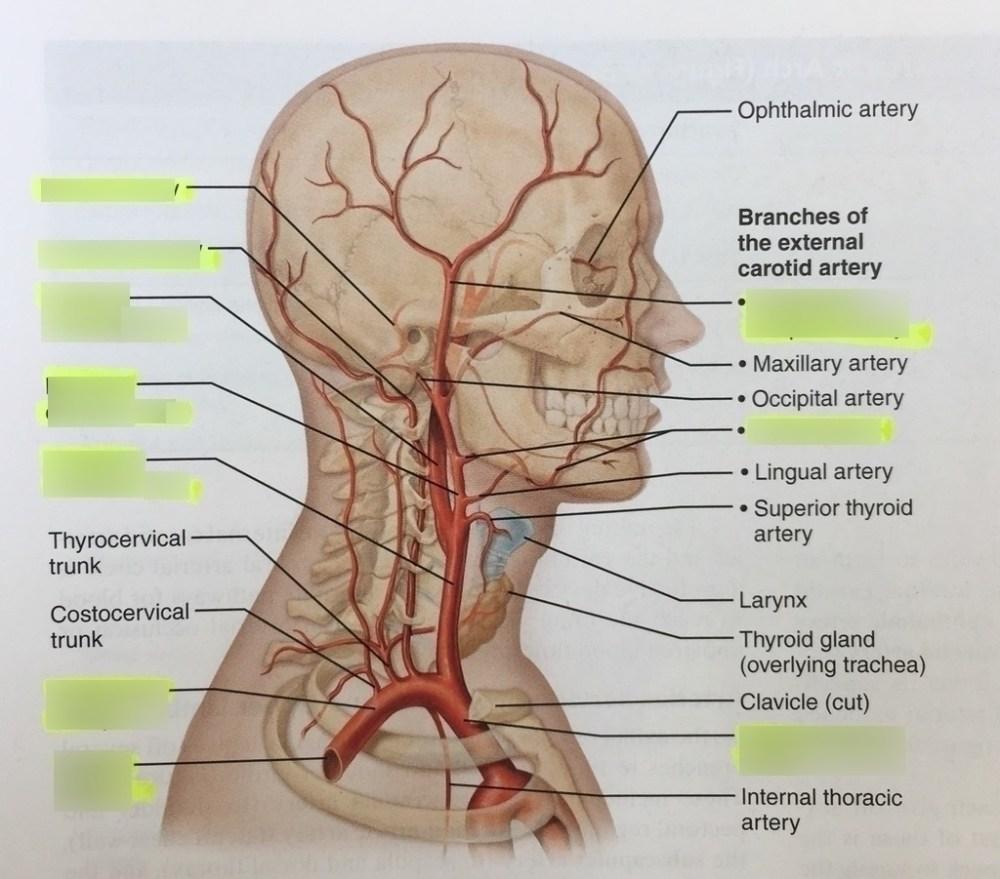 medium resolution of head exam diagram wiring diagram for you head exam diagram