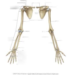 upper limb skeleton [ 940 x 1001 Pixel ]