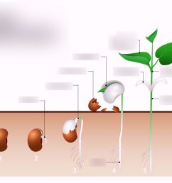 plant seed germination diagram wiring diagram used plant seed germination diagram wiring diagram plant seed germination [ 1024 x 822 Pixel ]