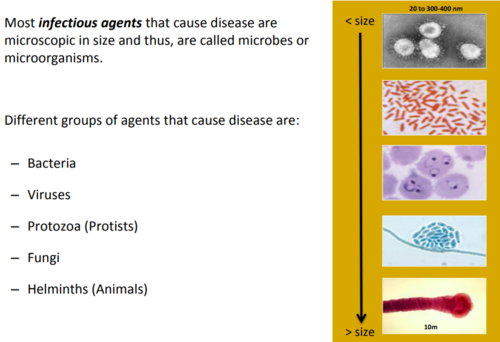 Infectious Diseases and Epidemiology - MT I Flashcards | Quizlet