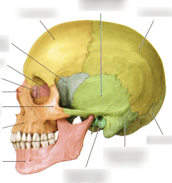 anatomy skull diagram labeled [ 1020 x 986 Pixel ]